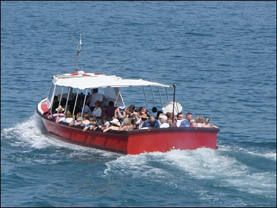 Take a boat trip to see the Dolphins
